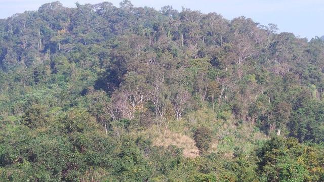Rừng tự nhiên của Việt Nam ngày càng nghèo kiệt, rừng trồng bị khai thác non