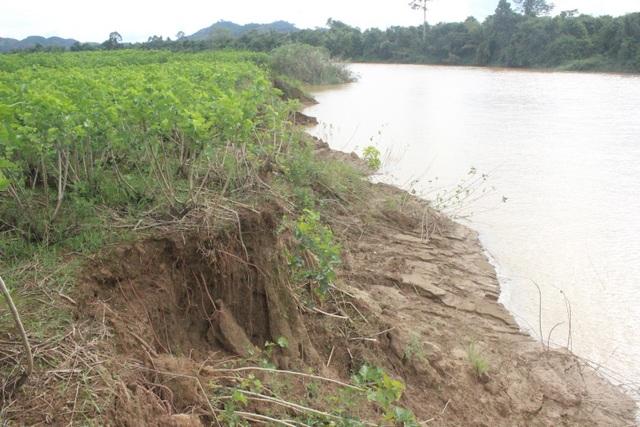 Nhiều diện tích cây trồng bị hư hại nặng do sạt lở đất gây ra