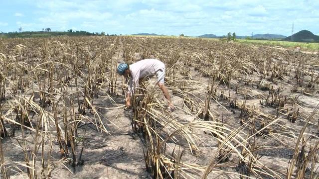 Nguyên nhân cháy là do thời tiết nắng nóng kéo dài cộng với sự bất cẩn của người dân