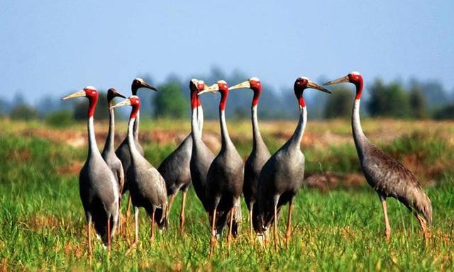Vườn Quốc gia Tràm Chim vẫn giữ được nét đặc trưng của vùng sông nước, hấp dẫn du khách. Ảnh: I.T