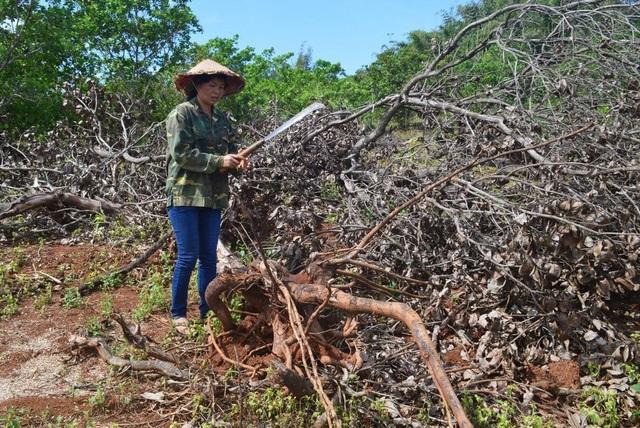 Công ty Long Sơn đã tự ý san ủi trên đất không thuộc dự án