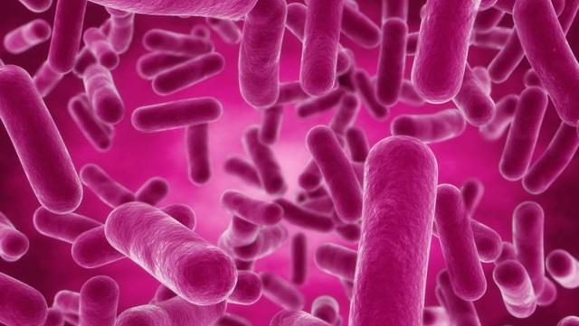 Tuy nhiên, sau khi uống vào đường tiêu hóa, 1 số lượng vi khuẩn sẽ bị phá vỡ cấu trúc bởi dịch vị dạ dày nên tỷ lệ vi khuẩn sống sót để xuống đến ruột non bị hạn chế đi khá nhiều. Chính vì thế, y học mới đây đã nghiên cứu và phát hiện, bào tử lợi khuẩn hay còn gọi là nội bào tử (một thể của những vi khuẩn có lợi thường có trong sữa chua khi vào cuối của thời kỳ sinh trưởng phát triển sẽ sinh ra bên trong tế bào 1 thể nghỉ có dạng hình cầu hoặc hình bầu dục) có ưu điểm hơn so với các Probiotic thông thường là có khả năng sống sót qua dịch vị acid của dạ dày tốt hơn để đến được ruột non. Chính vì vậy số lượng lợi khuẩn xuống ruột non cao hơn, khả năng ngăn chặn sự phát triển của hại khuẩn tốt hơn, phòng ngừa rối loạn tiêu hóa hiệu quả hơn. Từ đó bụng bé sẽ khỏe hơn và bé sẽ ăn ngon miệng hơn.