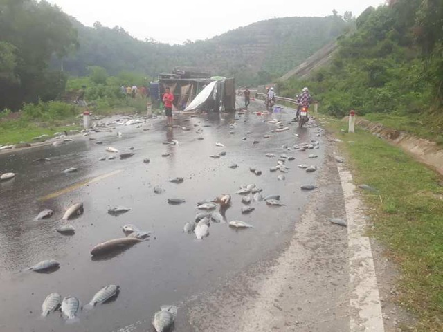 Cá trên thùng xe bị rơi ra ngoài, vương vãi khắp nơi trên đường.