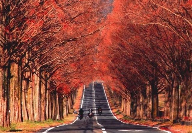 Những chuyến du lịch mùa thu sao có thể bỏ lỡ những điểm đến lãng mạn này - 4