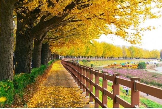 Những chuyến du lịch mùa thu sao có thể bỏ lỡ những điểm đến lãng mạn này - 5