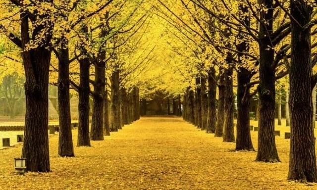 Những chuyến du lịch mùa thu sao có thể bỏ lỡ những điểm đến lãng mạn này - 8