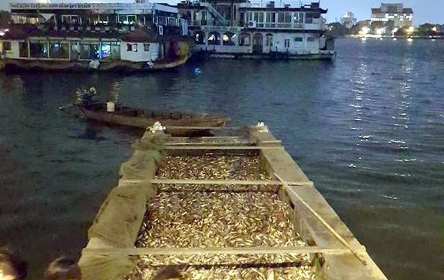 Khu vực tập kết cá sau khi đánh bắt