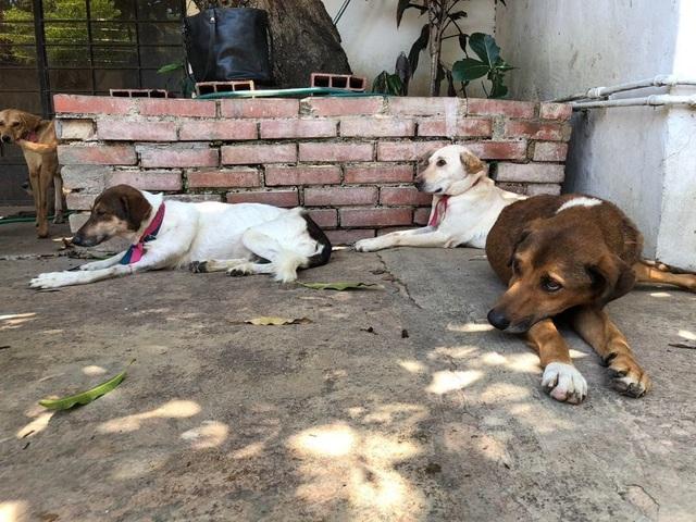Canelo, Olivia và Serena nằm trong số rất nhiều chú chó bị bỏ rơi trên đường phố bởi những người dân Venezuela không còn khả năng chăm sóc chúng nữa. (Nguồn: Rachelle Krygier / The Washington Post)