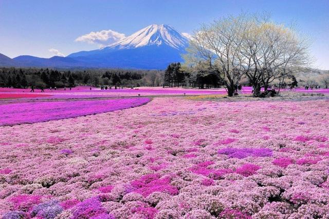 Từ vựng về thời tiết mùa xuân trong tiếng Nhật là gì ?