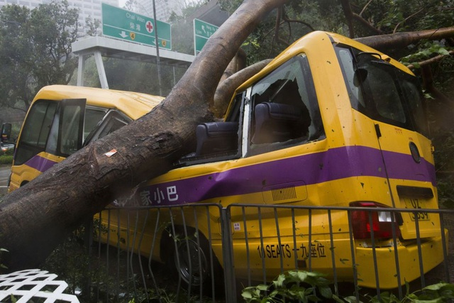 Một xe buýt đưa đón học sinh bị cây đè ngang thân tại Hong Kong hôm 16/9. (Ảnh: EPA)