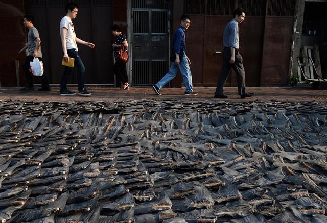 Vây cá mập được phơi công khai trên đường phố Hong Kong vào năm 2014. Ảnh: AFP.