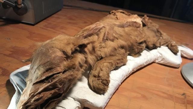 Một trong hai xác ướp được tìm thấy ở Canada.