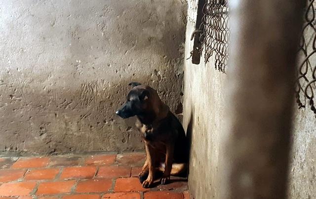Chó sau khi thu mua về sẽ được nhốt vào chuồng chờ ngày giết thịt. Ảnh: Diệu Bình