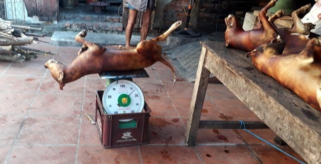 Chó được làm sạch chờ khách đến lấy. Ảnh: Ngọc Trang