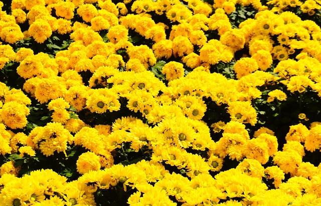 Khách Tây thích thú vườn hoa đầy sắc màu trước nhà thờ Đức Bà - 11