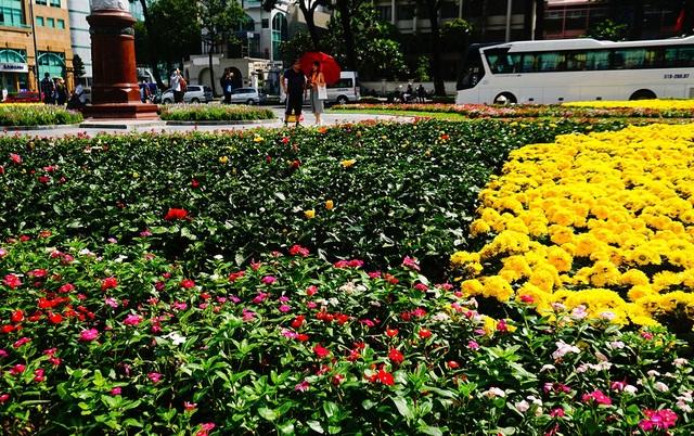 Khách Tây thích thú vườn hoa đầy sắc màu trước nhà thờ Đức Bà - 10