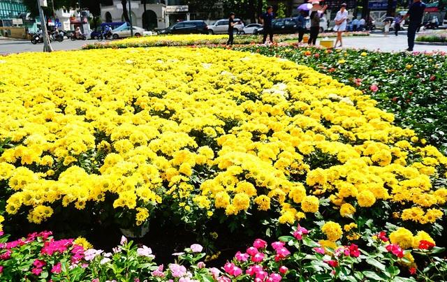 Vườn hoa khoe sắc giữa trung tâm thành phố.