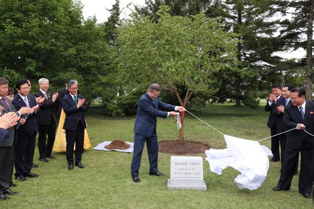 Tổng thống Moon trồng cây lưu niệm tại Bình Nhưỡng.