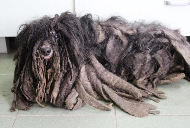Khi mới nhìn, bộ lông khiến nhiều người nhầm tưởng Farciarz là một sinh vật lạ
