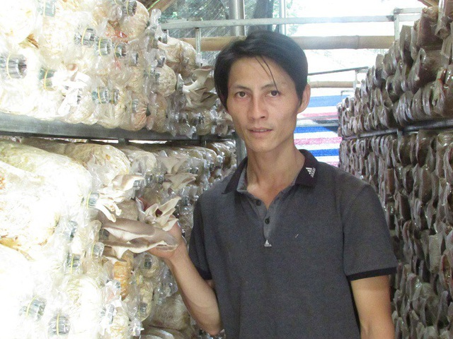 Từ trồng nấm, mỗi năm anh Hùng bỏ túi 200 triệu đồng