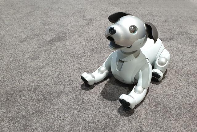 """Chú chó robot AIBO """"hồi sinh"""" hút khách xem tại triển lãm IFA 2018 - 1"""