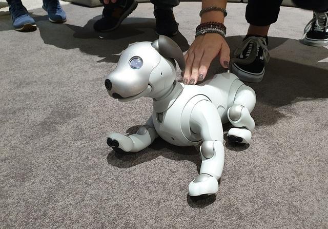 """Chú chó robot AIBO """"hồi sinh"""" hút khách xem tại triển lãm IFA 2018 - 2"""