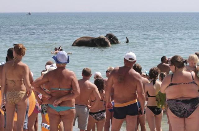 Mọi người quan sát voi từ một đoàn xiếc địa phương tắm dưới Biển Đen trong một ngày mùa hè nắng nóng tại Yevpatoria, Crimea, Nga.