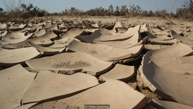 Mặt đất khô cằn nứt nẻ ở vùng lõm Danakil.