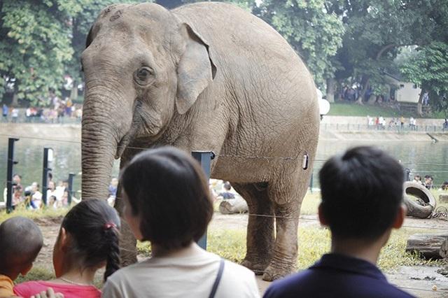 Dịp nghỉ lễ được bố mẹ đưa đi chơi, nhiều em nhỏ lần đầu được tận mắt chứng kiến những con vật ngoài đời thật mà trước đó chỉ được biết tới qua sách ảnh, tivi.