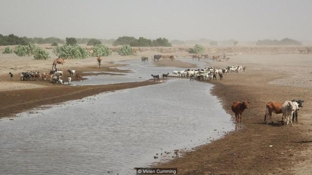 Sông Awash giúp cung cấp sự sống cho người Afar và đàn gia súc.