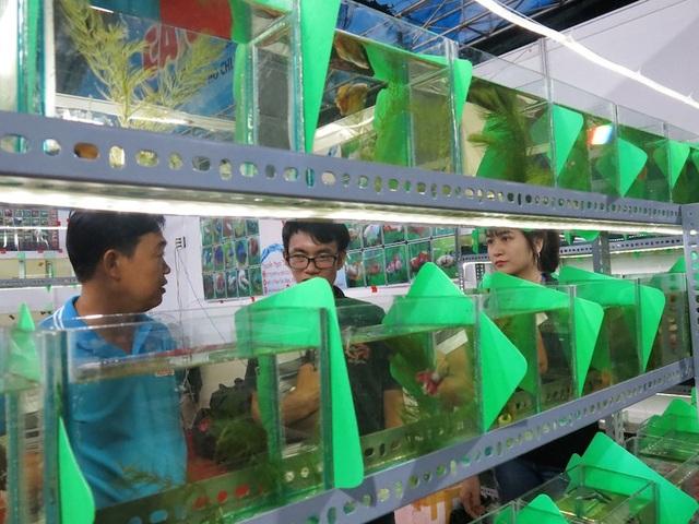 Ngày hội cá cảnh TPHCM thì ngày hội năm nay có 200 hồ cá giới thiệu các giống cá mớ