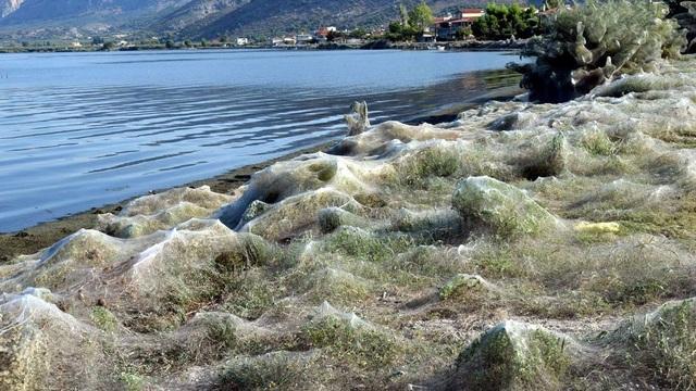 Kỳ lạ: Thị trấn ở Hy Lạp bị phủ kín bởi hàng nghìn lớp… mạng nhện - 1