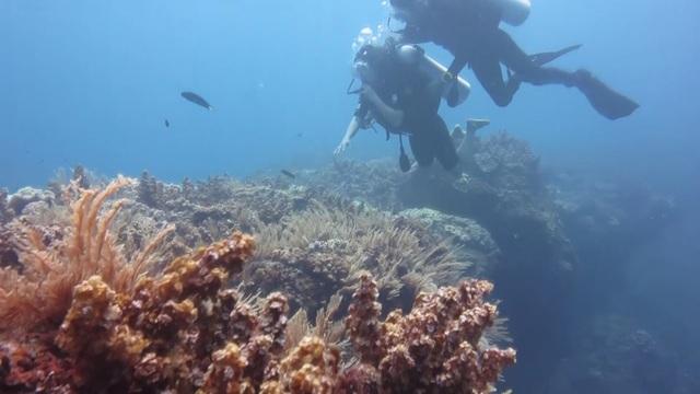 Từ đầu năm 2018, huyện đảo Lý Sơn bắt đầu tổ chức hoạt động lặn ngắm vòm đá núi lửa dưới đáy biển đảo Bé. Tại đây, du khách được hướng dẫn lặn chiêm ngưỡng khung cảnh kỳ thú của vòm đá với quy trình nghiêm ngặt để đảm bảo an toàn.