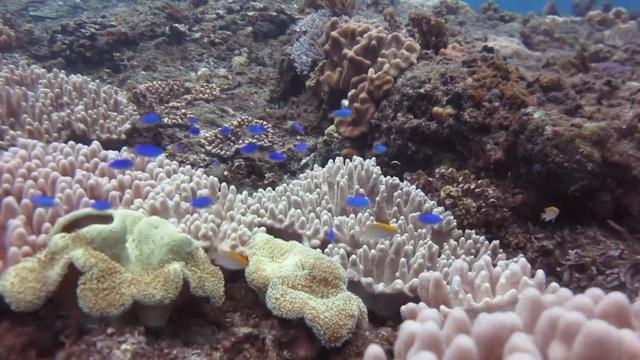 Ngoài việc được ngắm vòm đá núi lửa kỳ vĩ, du khách còn được hòa mình vào hệ sinh thái biển phong phú của vùng biển Lý Sơn. Theo khảo sát, vùng biển Lý Sơn có 700 loài động, thực vật với gần 140 loài rong biển, 160 loài san hô, hơn 300 loài cá, 100 loài giáp xác và một số loài khác phong phú, đa dạng về chủng loại.