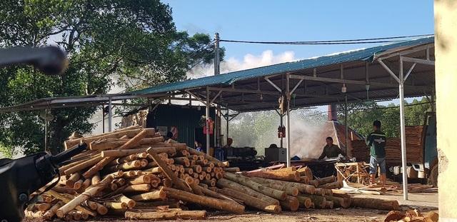 """Xưởng sản xuất gỗ """"3 không"""" mọc lên như nấm, chính quyền có làm ngơ? - 1"""