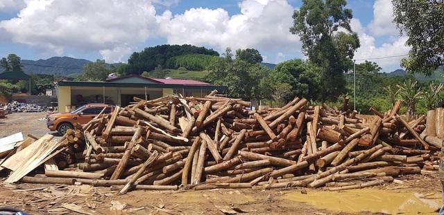 """Xưởng sản xuất gỗ """"3 không"""" mọc lên như nấm, chính quyền có làm ngơ? - 3"""