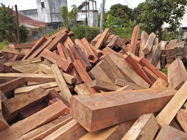 Một số loại gỗ quý từ nhóm I-VI được phát hiện trong làng