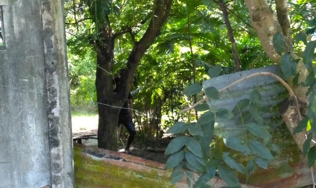 Người dân hốt hoảng khi phát hiện thi thể một người đàn ông treo cổ chết trên cây mấy ngày qua