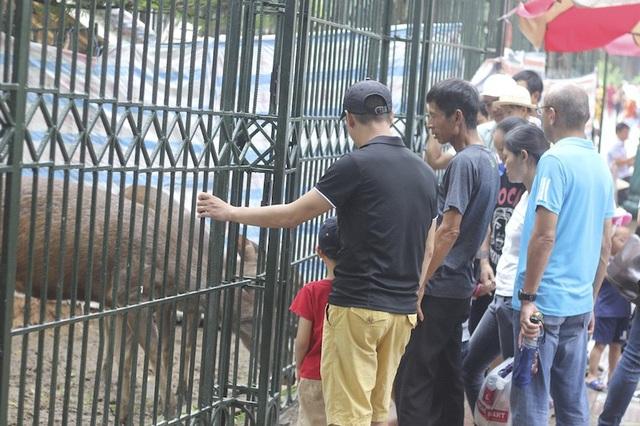 Hà Nội: Hơn 7 vạn du khách đổ về vườn thú, 21 trẻ em lạc mẹ được giao cho gia đình! - Ảnh 3.