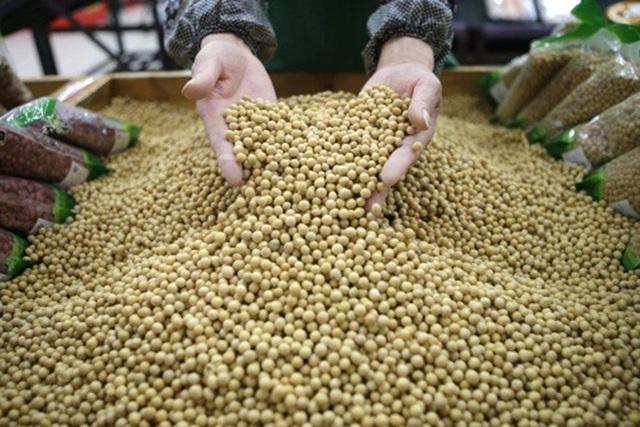 Hạt đậu nành là một trong những mặt hàng xuất khẩu của Mỹ mà Trung Quốc đánh thuế.