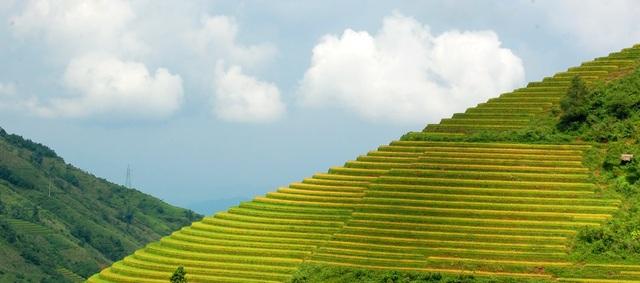 Ruộng bậc thang Sa Pa ( Lào Cai ) được tạp chí du lịch Mỹ Travel and Leisure bình chọn nằm trong Top 7 ruộng bậc thang đẹp, kỳ vỹ nhất châu Á và thế giới