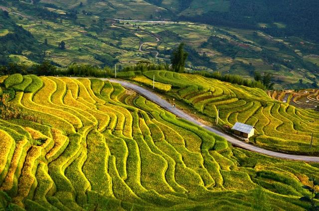 Ruộng bậc thang vùng cao Ý Tý (Lào Cai) được nhiều du khách tìm tới khám phá