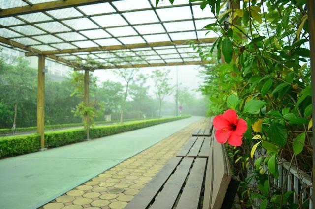 Buổi sáng tinh mơ của ngày hè lắng đọng tại KĐT Ciputra.
