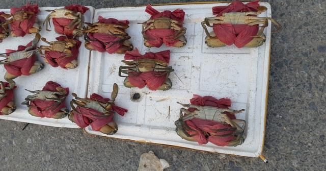 Loại cua biển được buộc bằng nhiều loại dây nhằm tăng cân nặng.