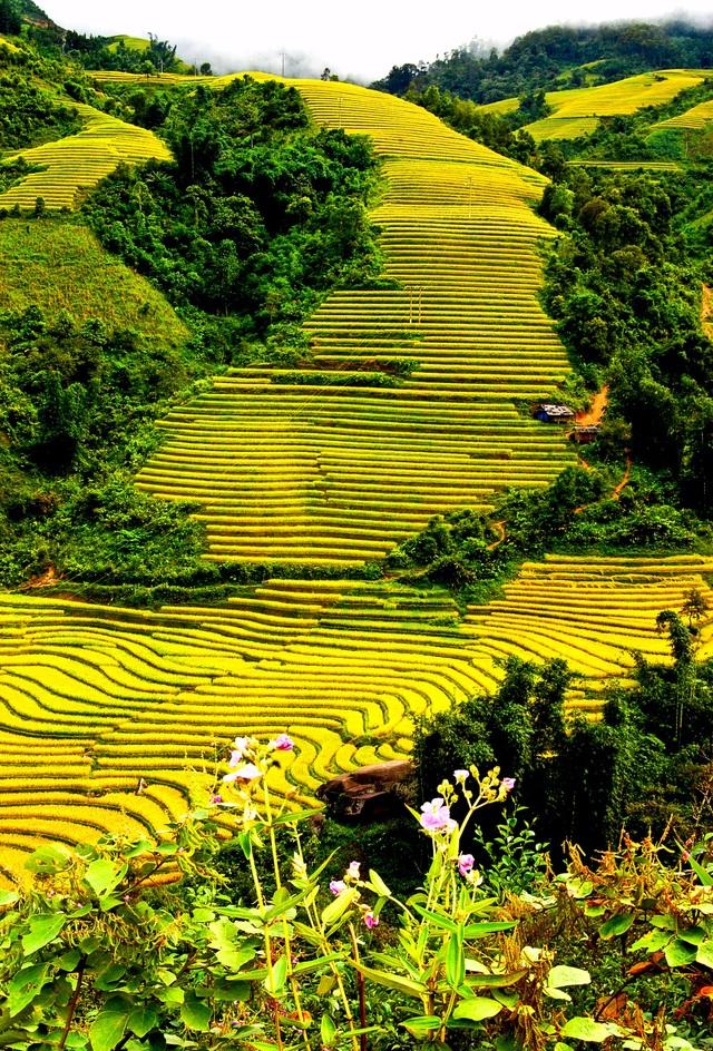 Vẻ đẹp hấp dẫn của ruộng bậc thang Trung Chải (Sa Pa) như những bậc thang khổng lồ đi lên trời cao