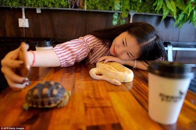 Quán cafe với nhiều loài bò sát đầu tiên ở Campuchia thu hút đông đảo thực khách là giới trẻ