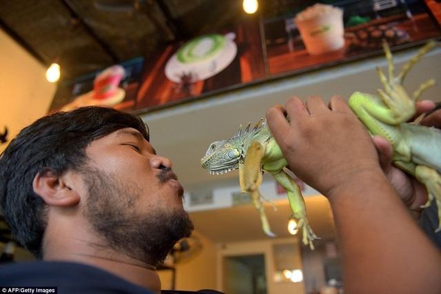 Đến quán cafe cảm giác mạnh: Chơi cùng rắn, bọ cạp và cự đà - 7