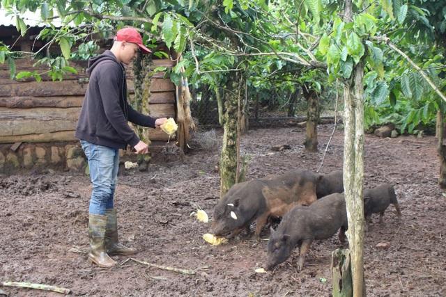 Brooke đang chăm sóc đàn heo đen trong khu vườn của gia đình
