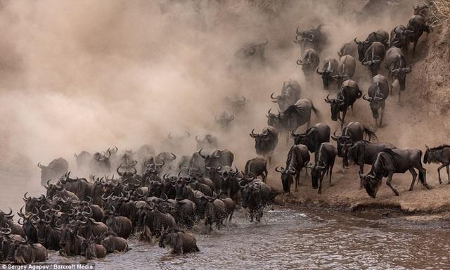 Cảnh tượng ngoạn mục của thế giới động vật