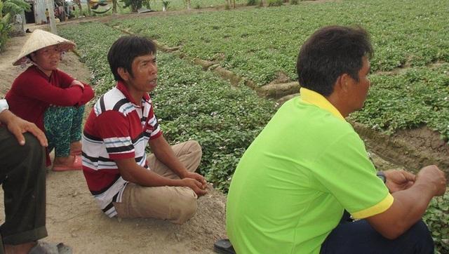 Vụ việc khiến nông dân trồng khoai vô cùng lo lắng khi không biết kẻ xấu sẽ quay lại phá hoại mùa màng khi nào.